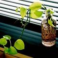 観葉植物画像
